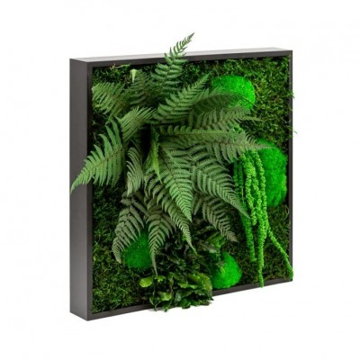 Moss wall art - Maintenance-free plants and moss