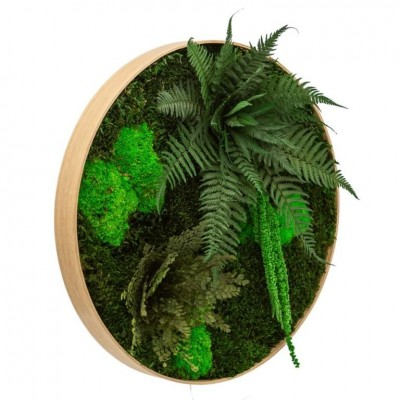 Round moss wall art - maintenance-free plants